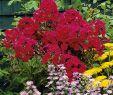 Gartenbedarf Onlineshop Neu Phlox Rot