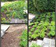 Gartenbeete Gestalten Bilder Einzigartig 53 Elegant Gartenbeete Gestalten Bilder