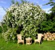 Gartenbepflanzung Ideen Inspirierend Herbstdeko Ideen Kreativ Bunt Den Garten Dekorieren Genial