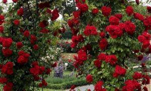 37 Schön Gartenbepflanzung Ideen