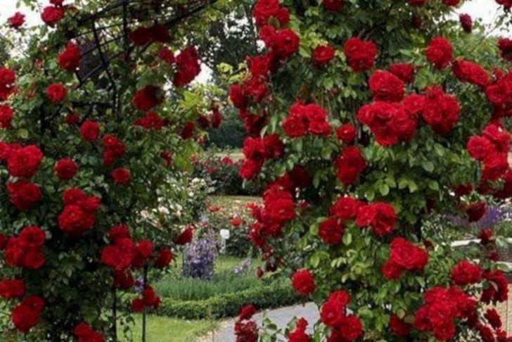 Gartenbepflanzung Ideen Neu 45 Awesome Garden Rose Flower Ideen Für Erstaunliche