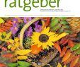 Gartenberatung Frisch Der Praktische Gartenratgeber 10 2018 Pages 1 16 Text