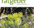 Gartenberatung Genial Der Praktische Gartenratgeber 9 2019 Pages 1 18 Text