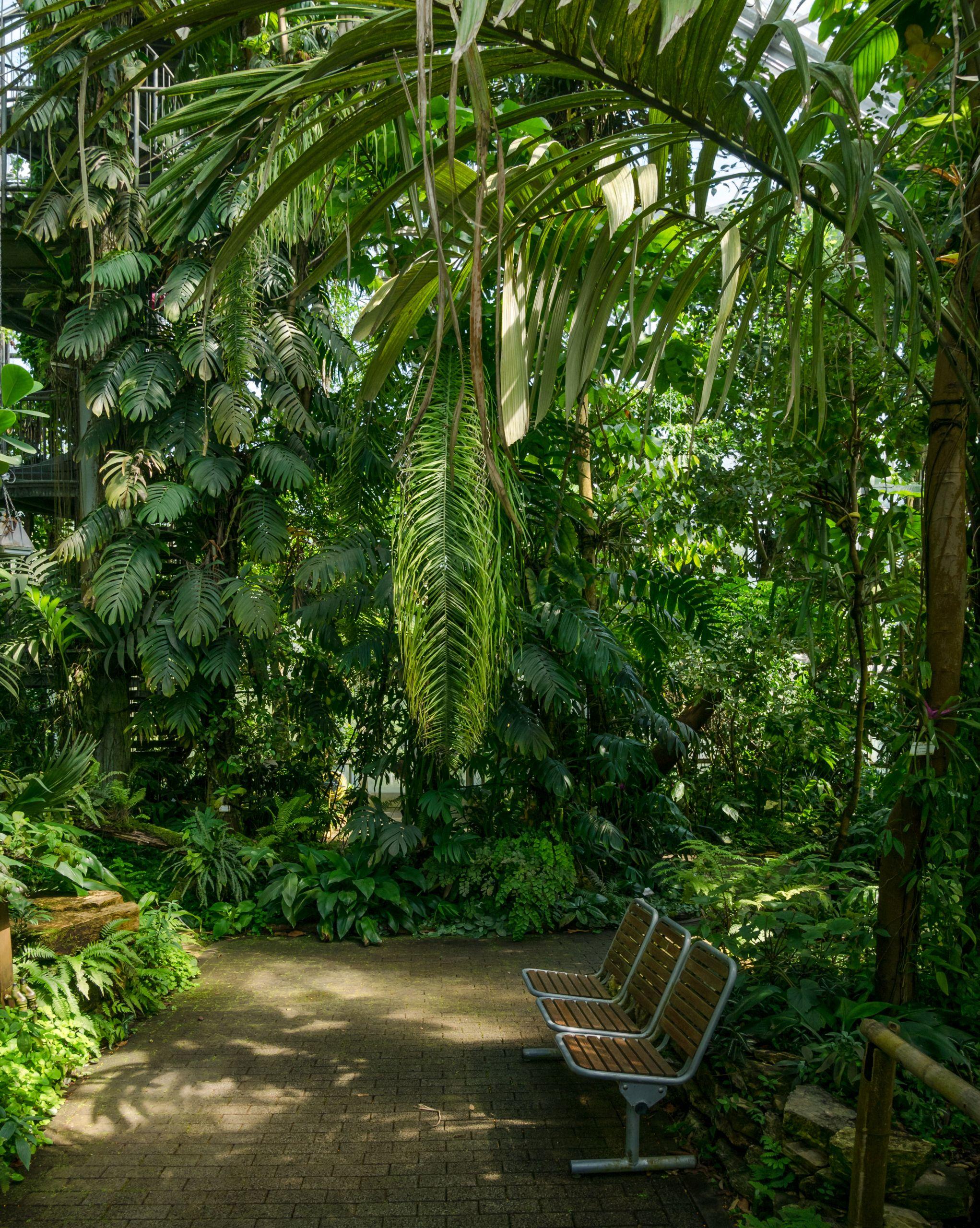 Osnabrück Botanischer Garten Tropenhaus Innenansicht BT 07