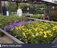 Gartencenter Genial Als Nursery Stock S & Als Nursery Stock Alamy