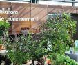 Gartencenter Genial Bellaflora Gartencenter Gmbh