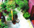 Gartendecko Schön Best Narrow Garden Ideas Pinterest Side Small Gardens and
