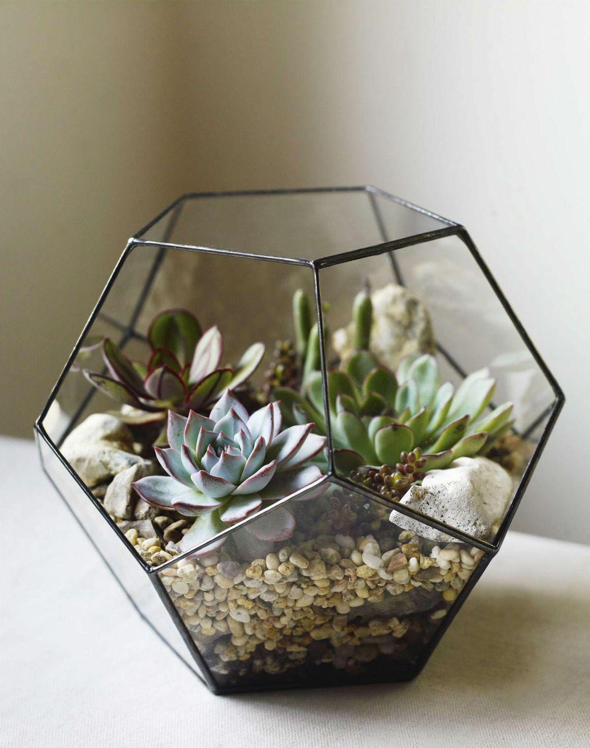 Gartendeko Aus Glas Luxus Glass Dodecahedron with Senecio Articulatus Echeveria