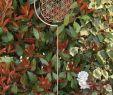 Gartendeko Edelstahl Schön Edelstahlstele Blume Des Lebens Gartenstecker Aus Edelstahl Ca 120cm Hoch