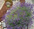 Gartendeko Groß Genial Mejores 44 Imágenes De Garden En Pinterest