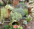 Gartendeko Groß Schön Mejores 44 Imágenes De Garden En Pinterest