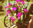 Gartendeko Hund Schön Gartendeko Gartengestaltung Gartenliebe Garten Blumen