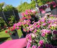 Gartendeko Katze Neu Güneşli Günlerden Geriye Kalan Güzel Bir Kare Almanya Nın