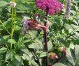 Gartendeko Landhausstil Schön Ich Freue Mich Sehr Denn Zum Ersten Mal Blüht Eine