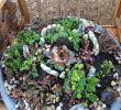 Gartendeko Metall Tiere Best Of Pin Auf Garten