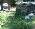 Gartendeko Säule Einzigartig Medveď Zničil úle Včelári Sa Náhrady Zrejme Nedočkajú