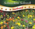 Gartendeko Schnecke Best Of Sb Schnecken Schreck Blühende Mischung