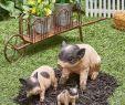 Gartendeko solar Schön Ss Farmhouse Pig Statues or Wheelbarrow In 2019