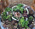 Gartendeko Tiere Frisch Pin Auf Garten