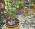 Gartendeko Zum Bepflanzen Schön Wieder Was Von Der to Do Liste Abgearbeitet 👍 Garten