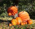 Gartendekoration Einzigartig Der Barlooon Als Gartendekoration Im Herbst Profesjonalista