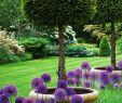 Gartendekoration Einzigartig English Garden with Lipop Yews and Allium Purple