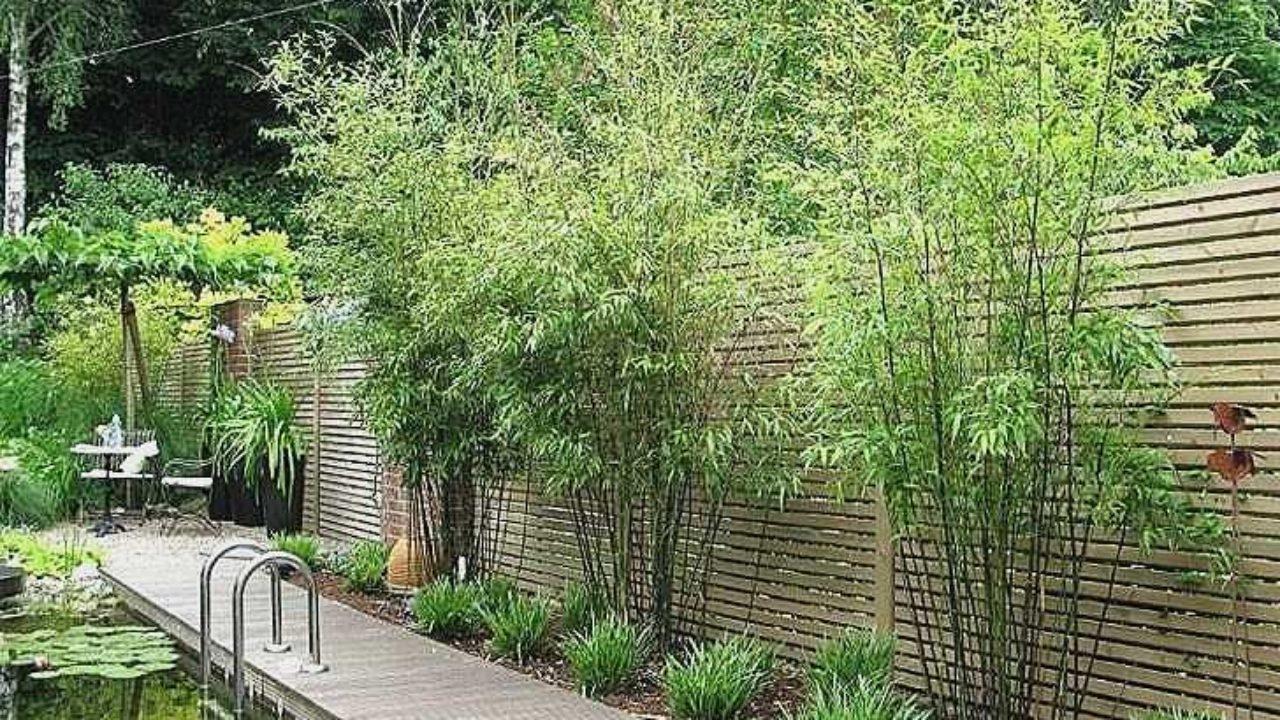 Gartendekoration Günstig Neu 20 Awesome Pflanzen Günstig Concept Jamesbechler