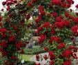 Gartendekoration Ideen Schön 45 Awesome Garden Rose Flower Ideen Für Erstaunliche
