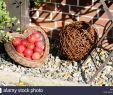 Gartendekoration Luxus Heart Rot Stock S & Heart Rot Stock Alamy