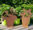 Gartendekoration Rost Best Of Erdbeerpflanze Hashtag On Twitter