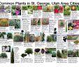 Gartenecke Gestalten Schön Pin On Washington County Utah Plants
