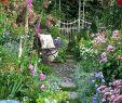 Gartenforum Best Of Pin by Adele Vercueil On Great Gardens and Ideas