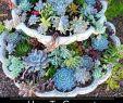 Gartenforum Neu 42 Elegant Succulent Garden Design Alexstand