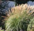 Gartengestaltung Beete Best Of Pflegeleichten Garten Mit üppigen Beeten Anlegen