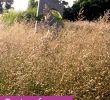 Gartengestaltung Beete Schön Beet Mit Gräsern Gestalten Meine 12 Lieblinge