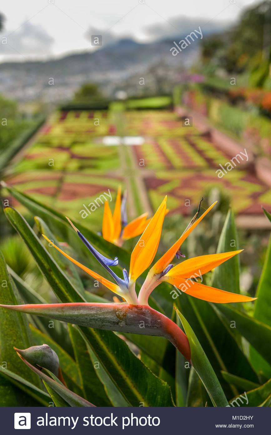 flowers botanical garden funchal madeira portugal blumen botanischer M1D2HY