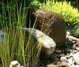 Gartengestaltung Mit Wasser Einzigartig Wasser Im Kleinen Garten
