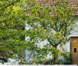 Gartengestaltung Pavillon Ideen Schön Garten T Räume Für Familien Mit Sen 10 Tipps Vom Profi