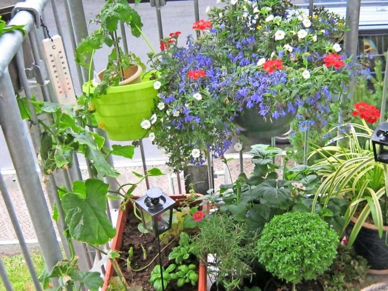 42 luxus garten pflanzen sichtschutz stock garten pflanzen sichtschutz garten pflanzen sichtschutz