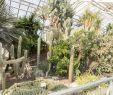 Gartengestaltung Pflanzen Schön File Botanischer Garten In Halle Saale Im Sukulentenhaus