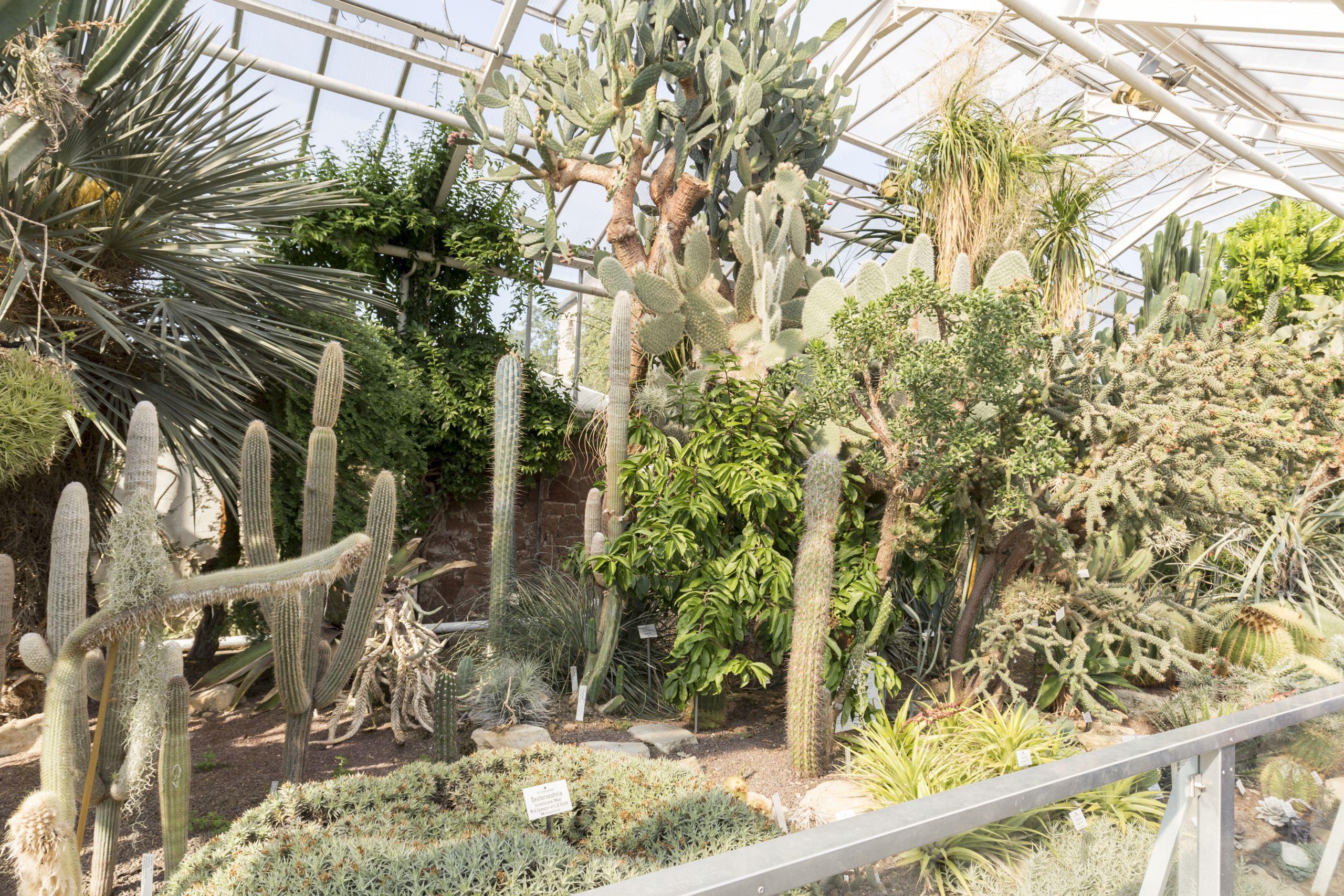 Botanischer Garten in Halle Saale im Sukulentenhaus tropische Pflanzen hautnah erleben panoramio 1