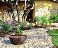Gartengestaltung Steingarten Luxus Kiesgarten Anlegen Ideen — Temobardz Home Blog