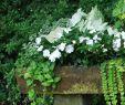 Gartenideen Kleiner Garten Luxus Beautiful Garden Details ✿⊱â•