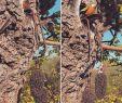 Gartenideen Mediterran Einzigartig Explore Hashtag Murva Instagram Instagram Twitch Girls