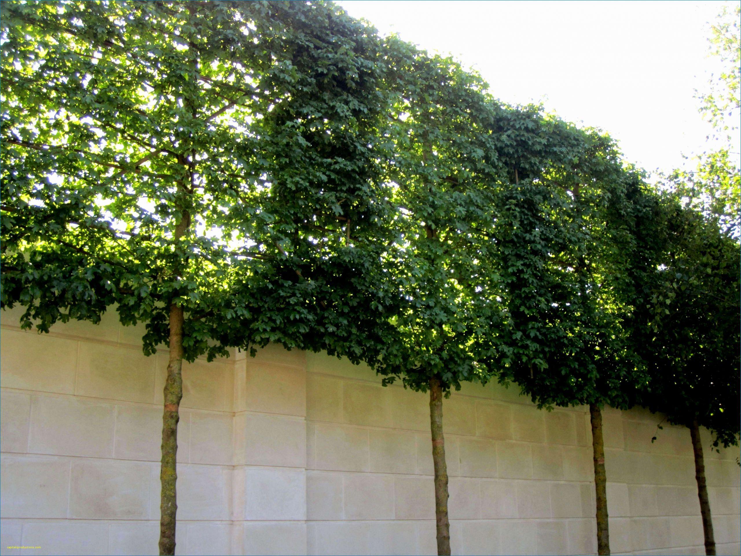 42 schon kleiner pool garten stock zimmerpflanzen gros modern zimmerpflanzen gros modern 1