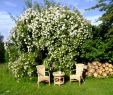 Gartenideen Zum Selber Bauen Luxus Herbstdeko Ideen Kreativ Bunt Den Garten Dekorieren Genial