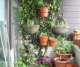 Gartenideen Zum Selber Machen Elegant 27 Luxus Garten Büsche Schön