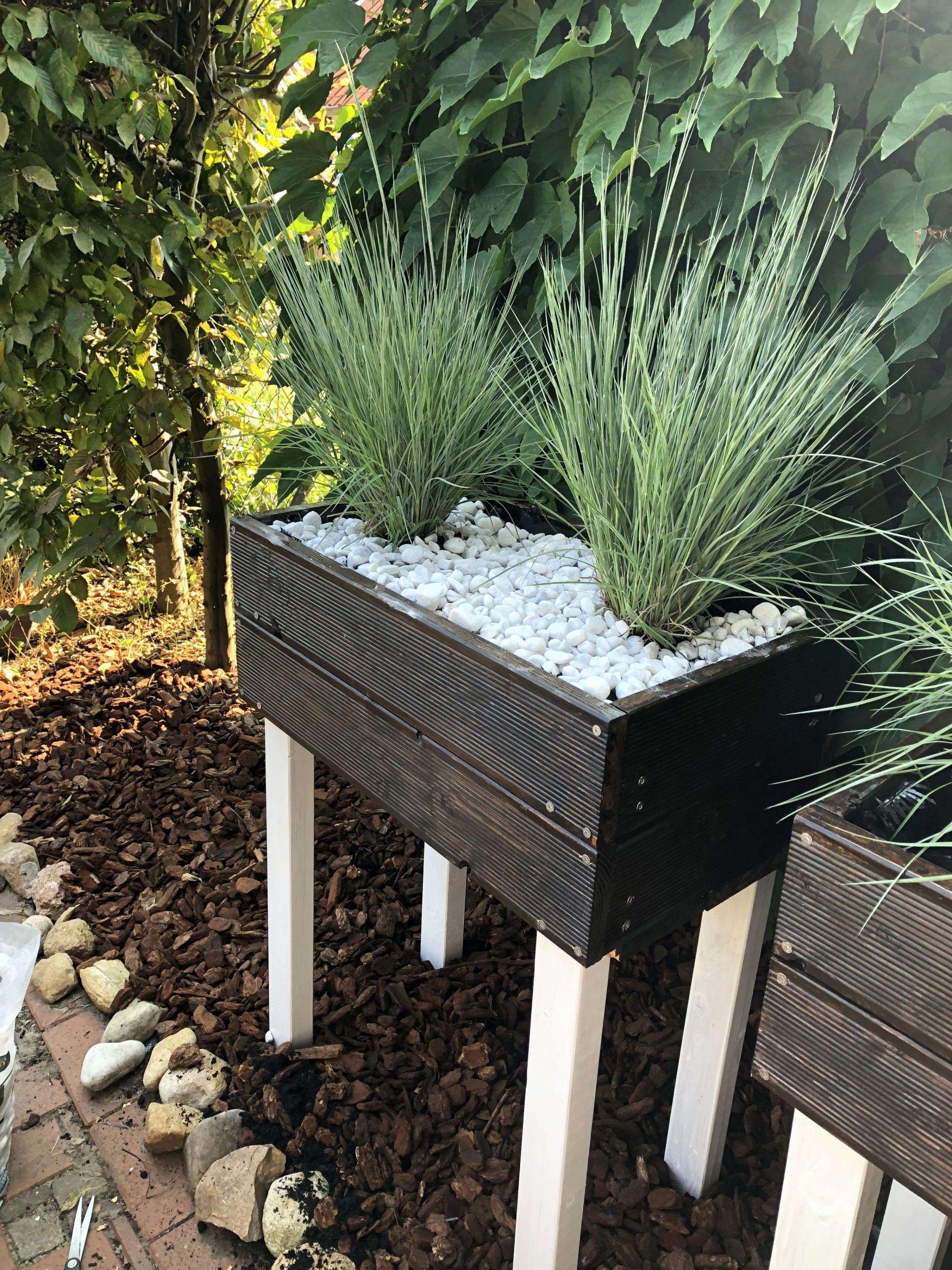 42 kollektion sichtschutz aus pflanzen bild pflanzen fur sichtschutz pflanzen fur sichtschutz