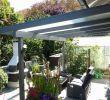 Gartenpflanzen Pflegeleicht Best Of Pflanzen Für Sichtschutz — Temobardz Home Blog
