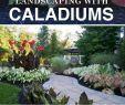Gartenpflanzen Pflegeleicht Einzigartig Landschaftsgestaltung Leicht Gemacht Mit Caladiums